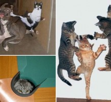 cats-ninja