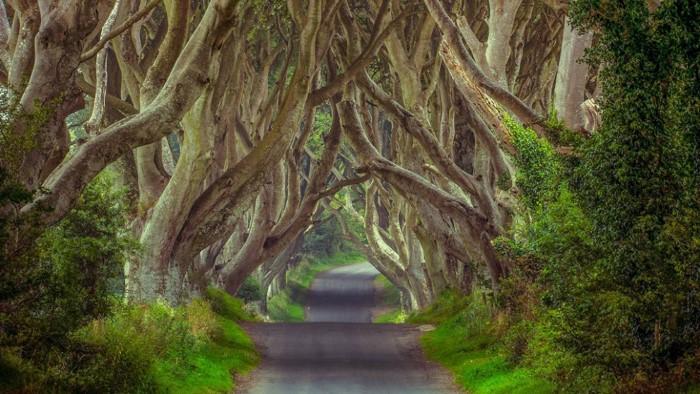 fabulous green tunnels