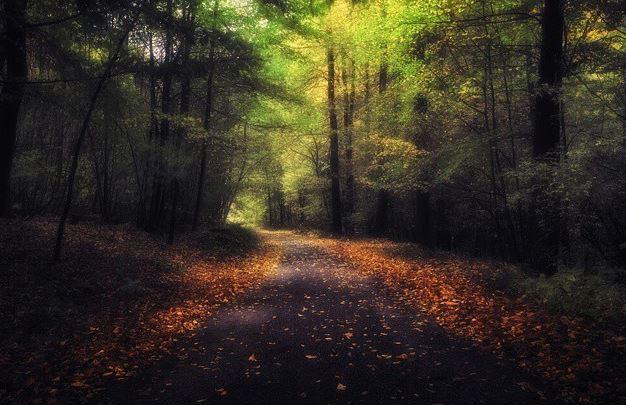 إحدى الغابات التشيكية في مدينة أوسترافا
