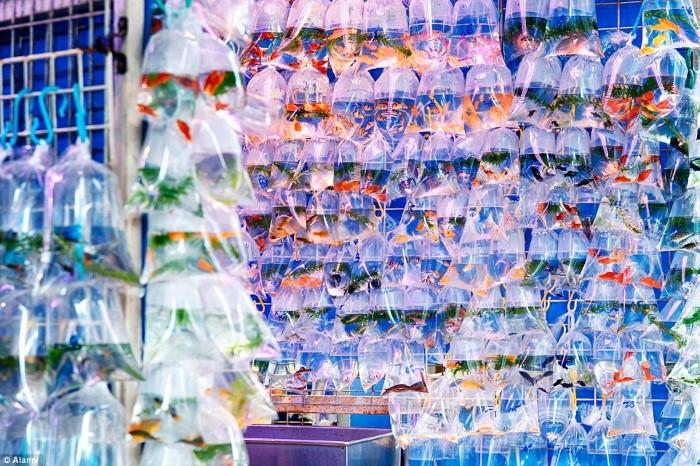 سوق أسماك الزينة في هونج كونج2