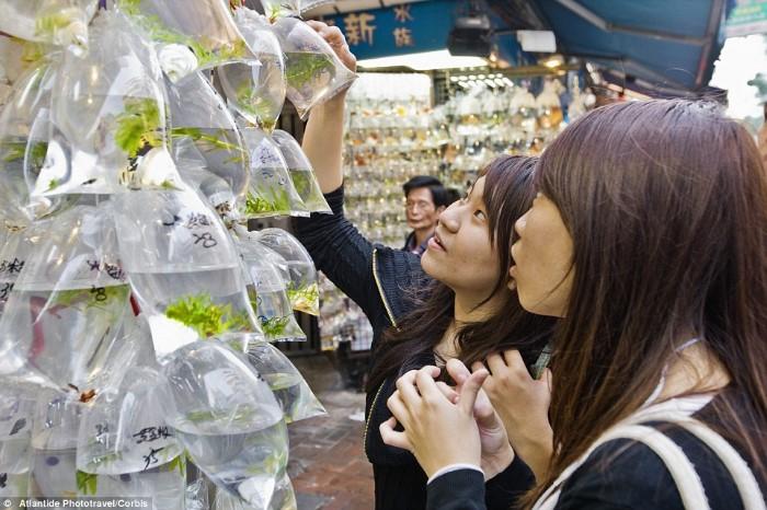 سوق أسماك الزينة في هونج كونج4