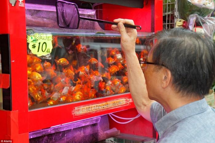 سوق سمك الزينة4