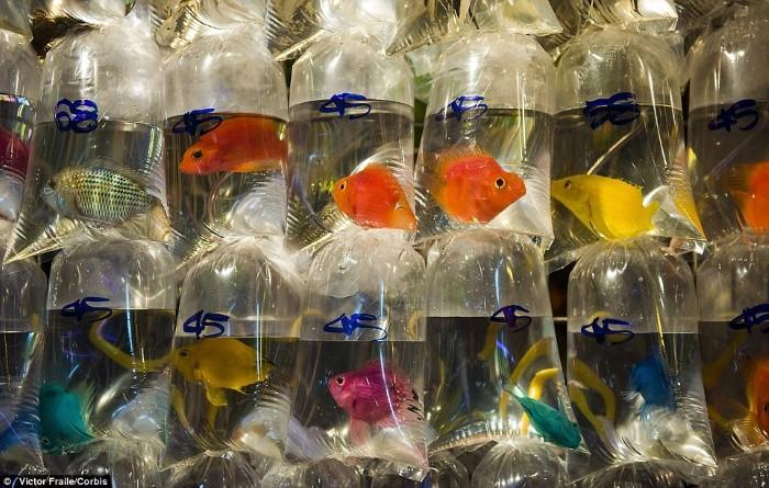 سوق سمك الزينة6