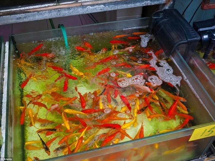سوق سمك الزينة7