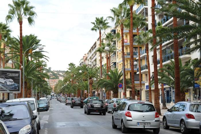 شارع النخيل