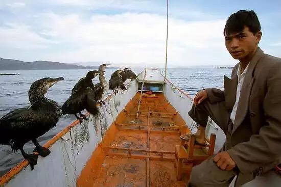 صور منوعة الصيد باستخدام طير الغاق