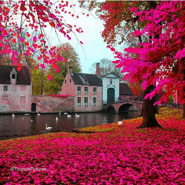 الربيع الوردي في مدينة بروج