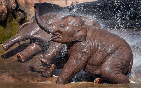 فيلان بعمر سنتين يلعبان بالماء