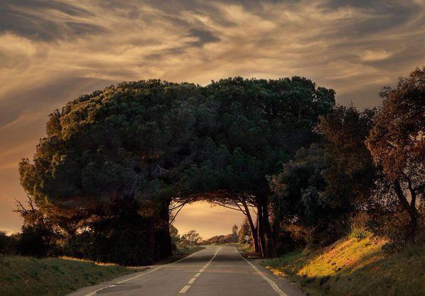 نفق طبيعي من خلال الأشجار في البرتغال