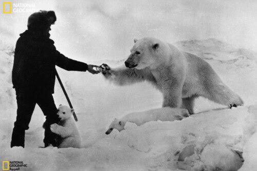 صور منوعة صغير الدب القطبي يتشبث برجل