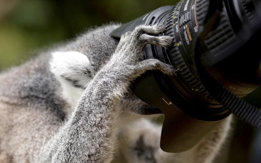 صور حول العالم يمور يأخذ صورة عبر إلصاق رأسه بعدسة كاميرا