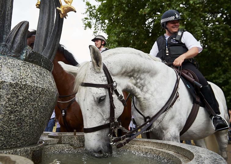 حصان شرطة يشرب من نافورة مياه في غرين بارك بلند