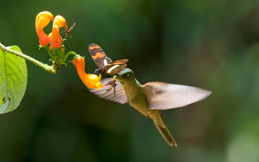 صور حول العالم ثلاثة مخلوقات مختلفة، طائر الطنان ودبور وفراشة، يجتمعون سويا على زهرة واحدة