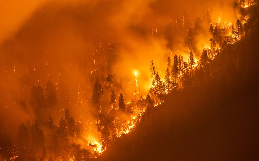 الحرائق الشديدة تأكل أشجار ومزارع الصفصاف قرب بحيرة باس في غابة سييرا الوطنية في كاليفورنيا.