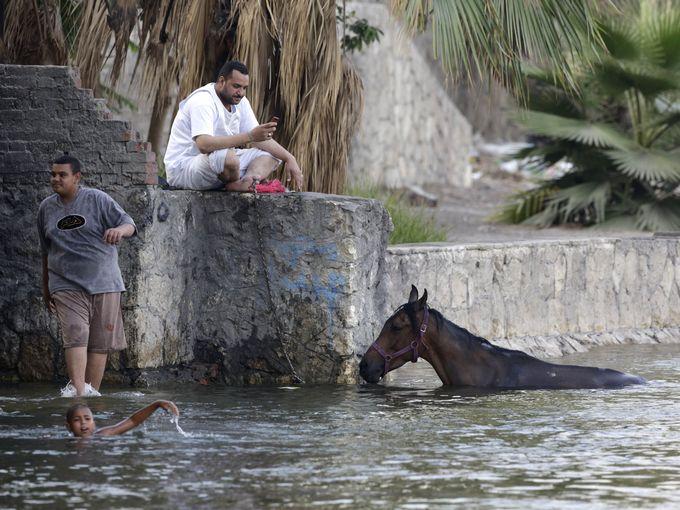 مواطن مصري يتفقد هاتفه المحمول في الوقت الذي تسبح فرسه بنهر النيل