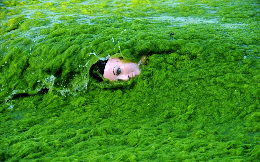 """موجة من الأعشاب البحرية تقذف رأس نموذج """"ماليكان"""""""