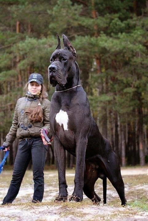 كلب 13
