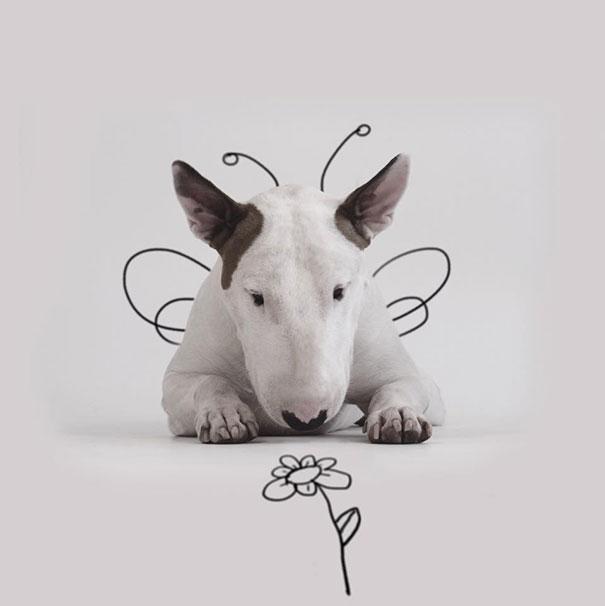 """""""رافائيل مانتيسو"""" تركته زوجته في عيد ميلاده الثلاثين، ليدخل في حالة من الحزن الشديد، ولكنه سرعان ما عادت له حياتة الطبيعية، وبدأ مشوار المرح والابداع رفقة كلبه على انستقرام ، حيث كان يقوم بمزج بعض الرسومات الكوميدية مع هذه الكلب، الذي كان يتفاعل معها بأسلوب جميل، وقد نالت هذه الأعمال إعجاب عدد كبير من مستخدمي انستقرام، وقد حصل على أكثر من 300 ألف متابع على انستقرام، ليصبح أحد نجوم هذه الشبكة الاجتماعية الكبيرة."""