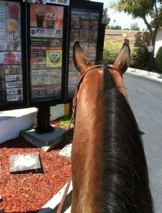 حصان في المدينة