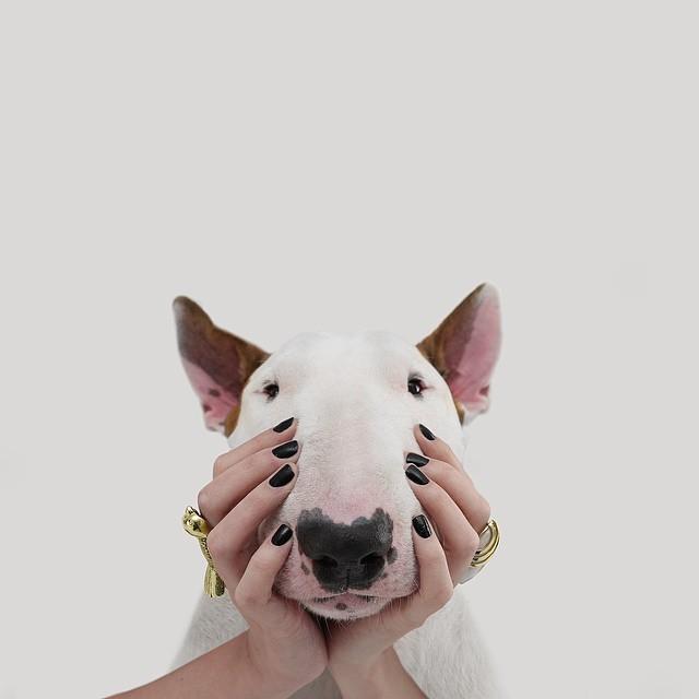 كلب حائر