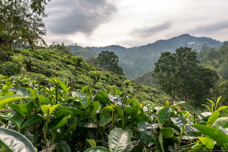 الطبيعة الخلابة في قرية إيلا في سريلانكا