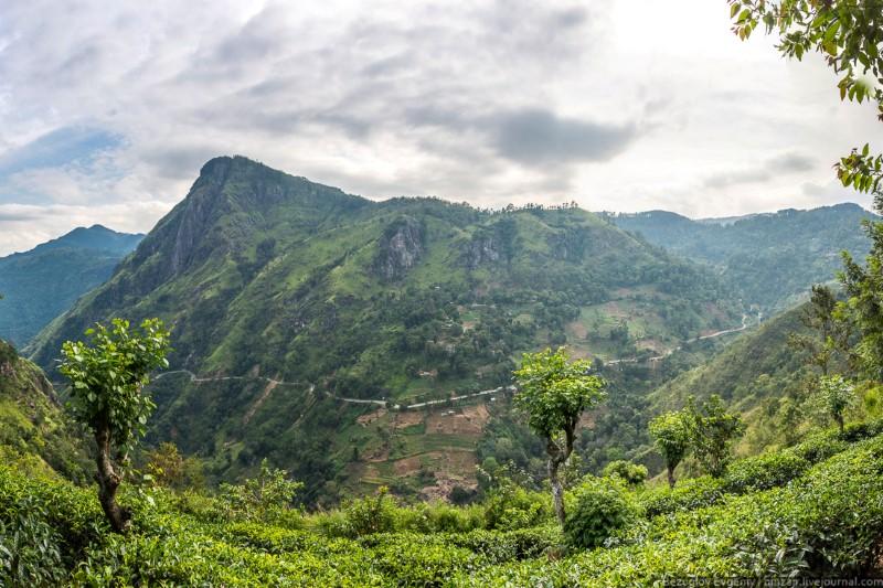 الطبيعة الخضراء حول الجبال الشاهقة