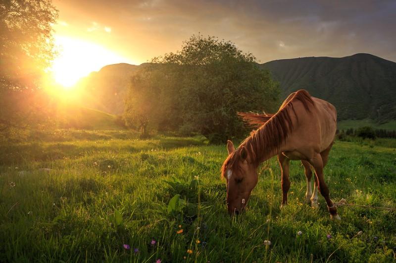 خيول وطبيعة
