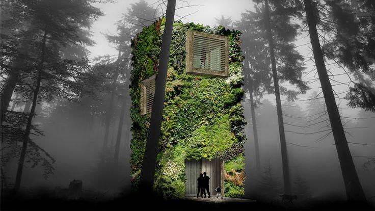 منازل الأشجار