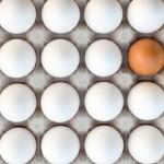 البيض الفاسد
