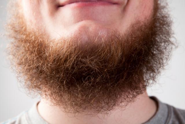 شعر الجسم
