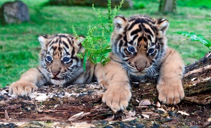 حدائق الحيوانات