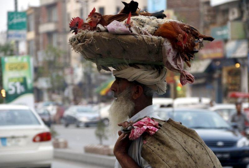 الحياة في باكستان 3008159