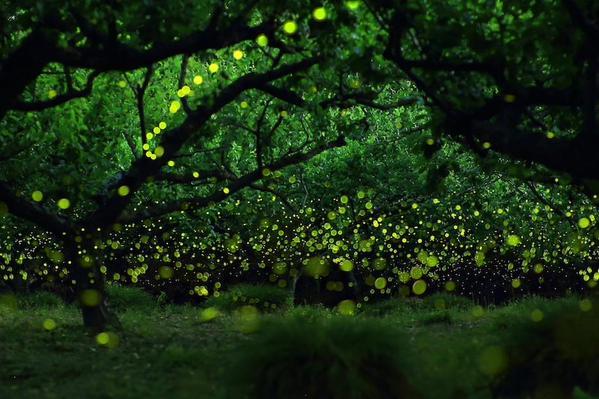 صورة ساحرة من غابة الخنافس المضيئة