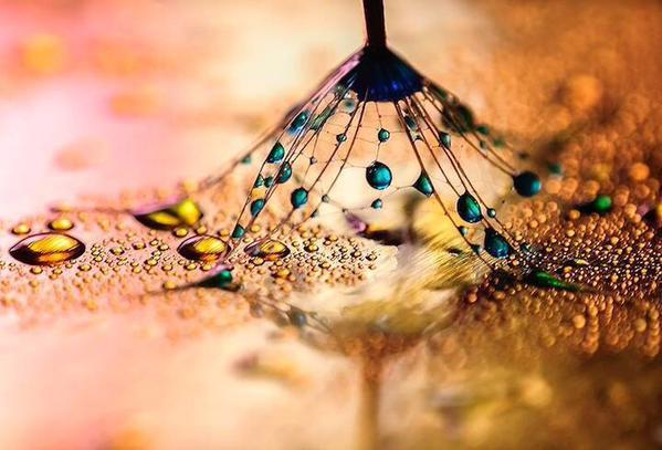 مصور مبدع يلتقط صور مايكرو لجمال وسحر قطرات الندى في الطبيعة