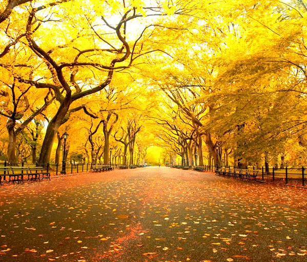 حديقة نيويورك المركزية