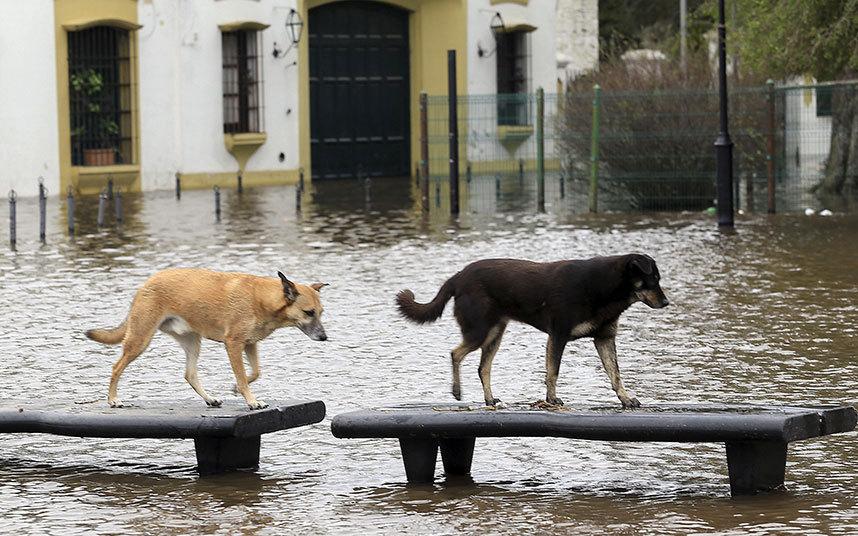 صور حول العالم فيضانات