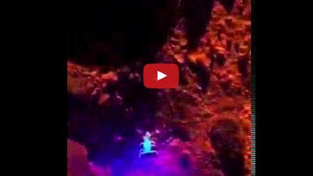 فيديو كشاف العقارب