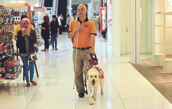 كلاب مساعدة2