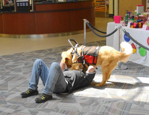 كلاب مساعدة3
