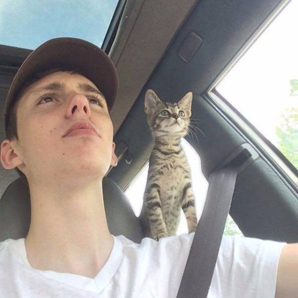 قطة ورجل