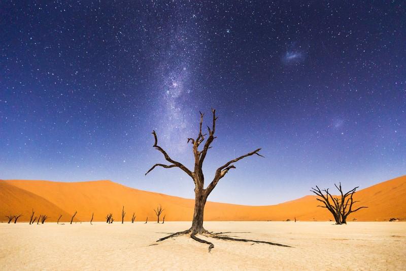 شجرة وسط الصحراء