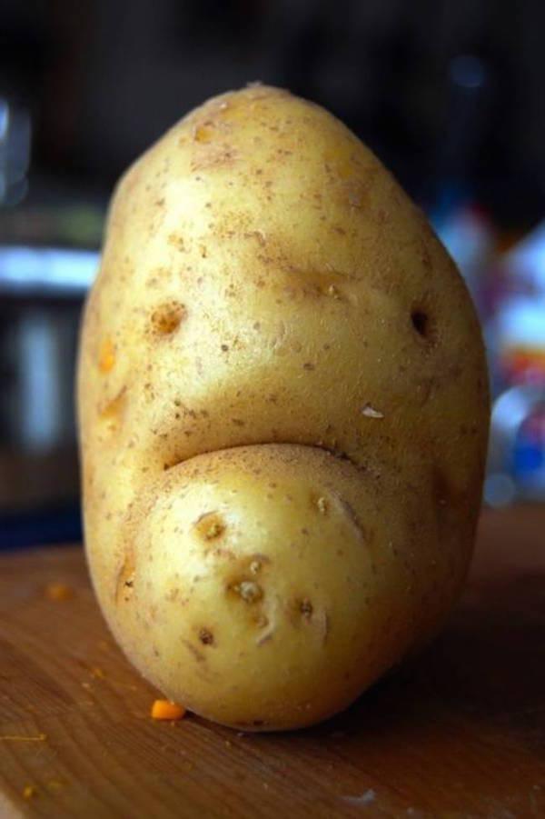 حبة بطاطس