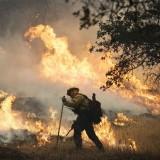 حرائق الغابات الأمريكية