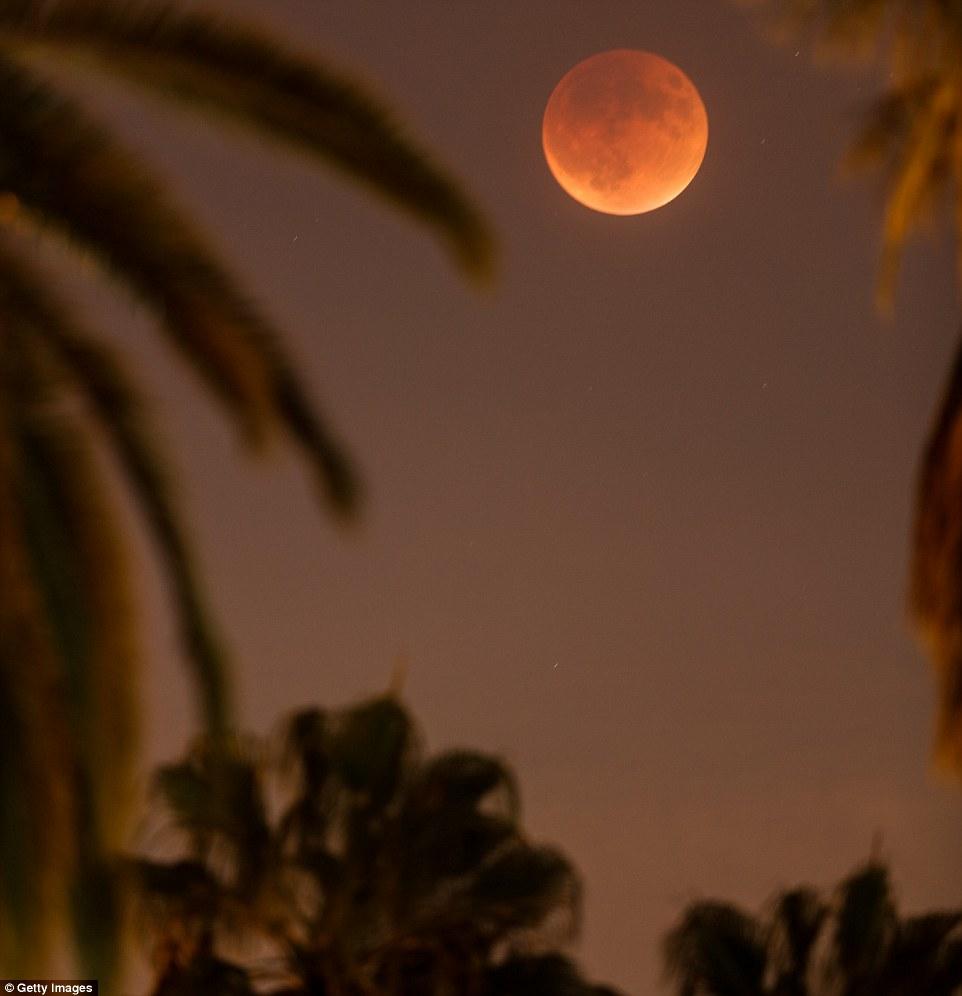 قمر فوق النخيل