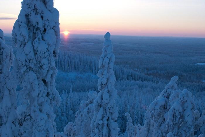 شجار مغطاة بالثلوج