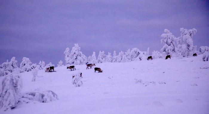 حيوانات الجليد