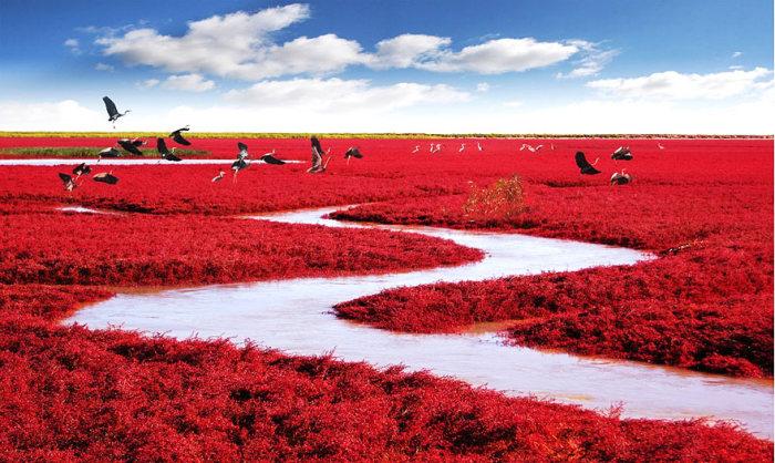 حديقة أزهار حمراء