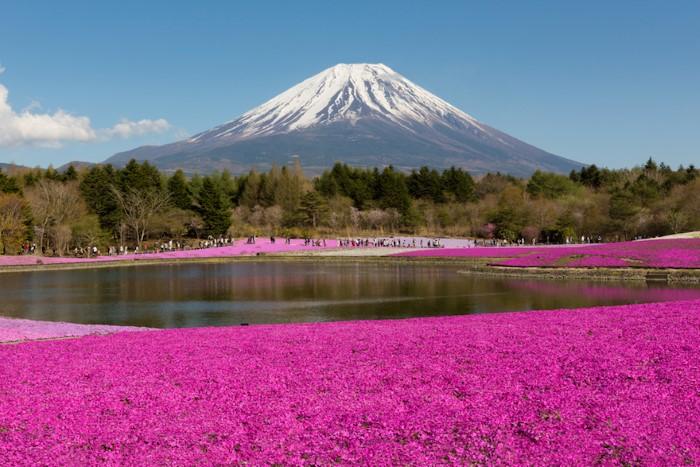 مهرجان الزهور في اليابان