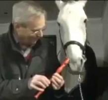 حصان يعزف على الناي بأنفه..! (فيديو)
