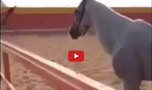 فيديو ضرب حصان